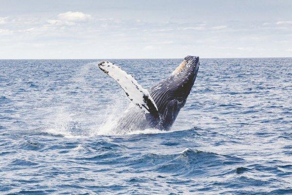 Когда кита обнаружили, то он уже был мертв