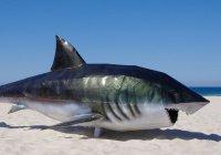 Стало известно, где акулы атакуют людей чаще всего