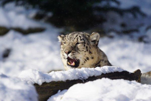 По словам эксперта, ключевая причина исчезновения видов — нелегальная торговля животными