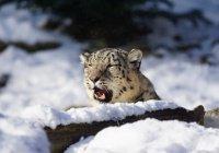 В WWF рассказали, почему исчезают редкие животные в России