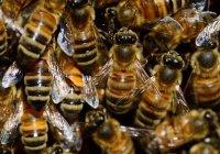В Китае пчелы захватили машину (ВИДЕО)