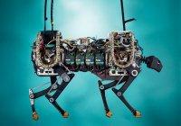 Робот-гепард научился делать сальто назад и танцевать чечетку (ВИДЕО)
