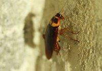 В Китае в ухе девушки поселился таракан