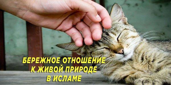 Правда ли, что за хорошее отношение к животным человеку прощаются грехи?