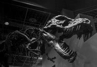 Ученые назвали настоящего убийцу динозавров