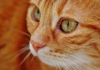 В США кошка спасла хозяев от смерти