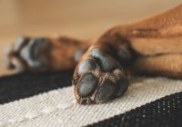 ДНК-базу собак собирают в Великобритании