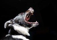 Эксперт: намордник может не спасти от укуса собаки
