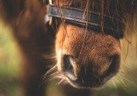 Под Астраханью бешеный конь искусал 4 людей