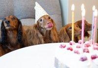 Названа самая кусачая порода собак