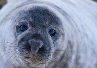 Под мостом в Санкт-Петербурге перезимовал тюлень