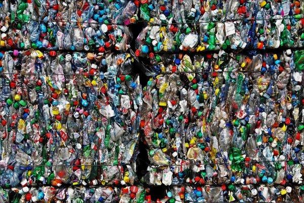 В итоге из желудка кита достали 40 кг пластика
