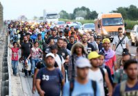 ВОЗ: мигранты страдают от депрессии в 5 раз чаще коренного населения