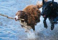 В США мужчина бросился в ледяную реку ради собак (ВИДЕО)