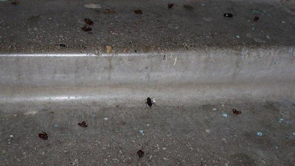 Нашествие тараканов в одном из центров содержания беженцев.