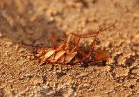Житель США пытался убить таракана и чуть не погиб