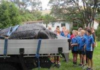 Редкую черепаху обнаружили мертвой в Новой Зеландии