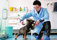 Первая клонированная полицейская собака приступила к тренировкам