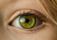 Безопасный «клей» для глаз создан в Гарварде