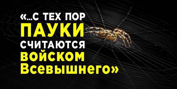 Голуби и паук: как эти животные связаны с жизнью Пророка Мухаммада (мир ему)?