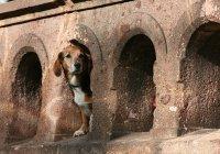 В Англии собака 5 дней блуждала под землей