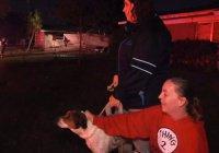 В США собака спасла семью от гибели