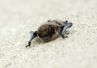 В Волгограде школьник поселил у себя сотни летучих мышей