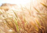 В Тюмени создали сельскохозяйственного робота