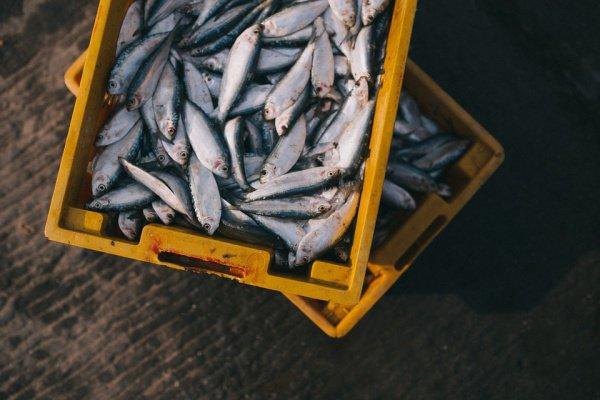 При этом интенсивность окраски пропорциональна содержанию в морепродуктах опасного вещества