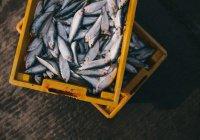 Создан сенсор для обнаружения в рыбе вещества, вызывающего рак