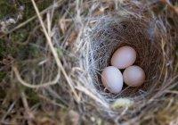 В Китае нашли куриные яйца возрастом 2,5 тыс. лет