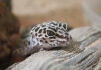 Стало известно о завезенном в Сочи новом виде рептилий