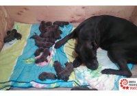 Собака родила и оказалась в Книге рекордов России