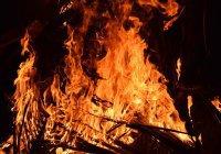 В Магадане спасатели реанимировали пострадавших при пожаре котов (ВИДЕО)