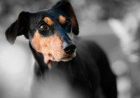Ученые: собаки могут предсказывать эпилептические припадки