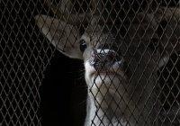 В Испании зверей бросили умирать в закрытом зоопарке