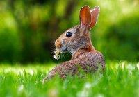 Полиция Франции объявила о наборе на службу кроликов