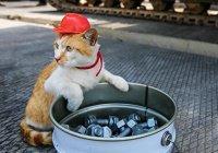 В Крыму поддержали идею установить памятник коту Мостику