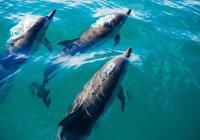 Ученые предупредили о риске полного вымирания дельфинов