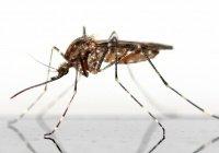 Обнаружена музыка, отпугивающая комаров
