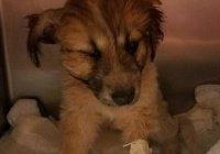 В штате Аризона сова похитила собаку