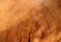 В Швеции ученые создали прозрачную древесину