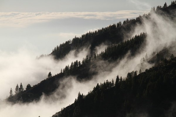 Сбор научных материалов и замеры температуры проводились в 98 лесных массивах на 5 континентах - от тайги до тропиков
