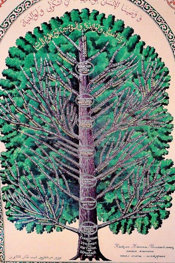 Родословное древо: с чего начать и как составить?