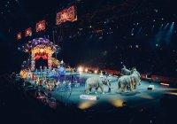 В Словакии официально запретят цирк с животными
