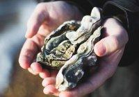 Громадная устрица найдена во Франции