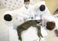 Обнаруженное в России вымершее животное воскресят
