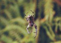 В Великобритании паук прожег ногу мальчика