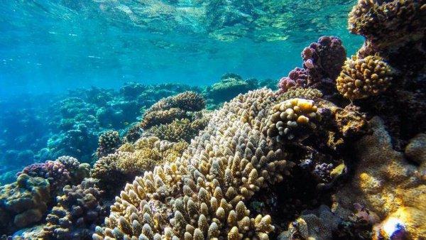 Площадь рифа составит 300 тысяч квадратных метров.