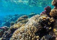 Крупнейший в мире искусственный коралловый риф создадут в ОАЭ